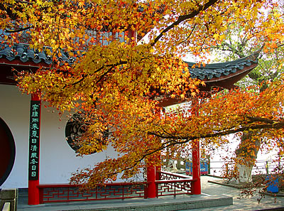 Hangzhou maple leaves in fall (c) 2003 by John C. Goss